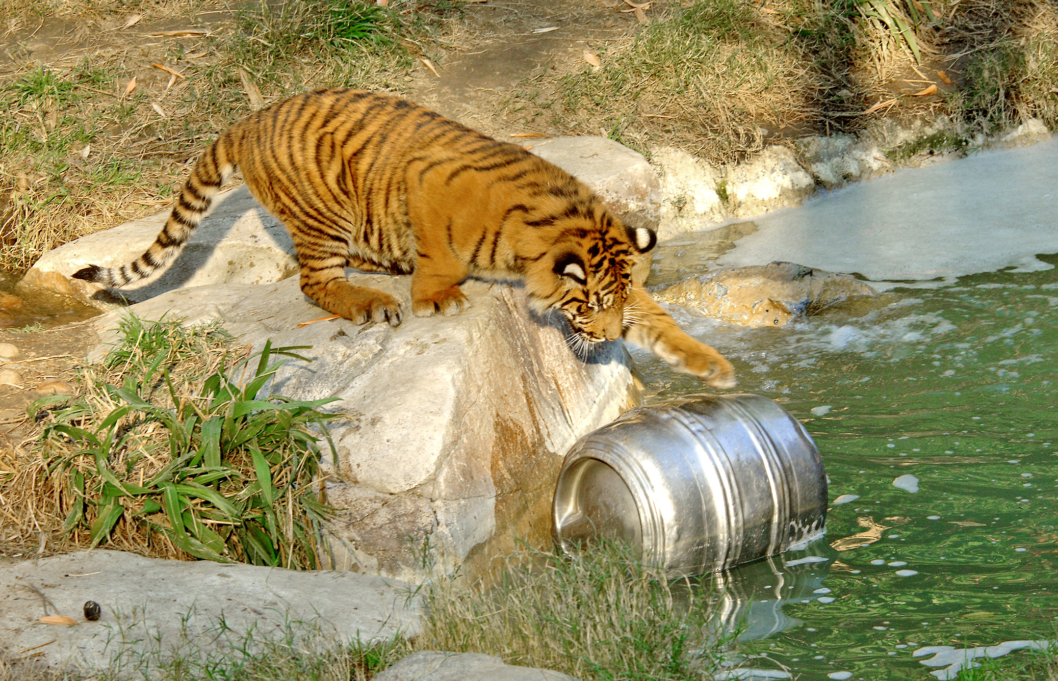 Tonight! Brew at the Zoo