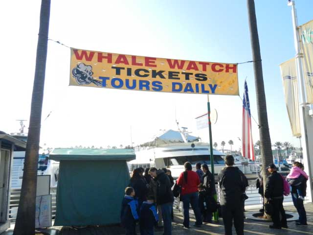 Whale Watching in Long Beach