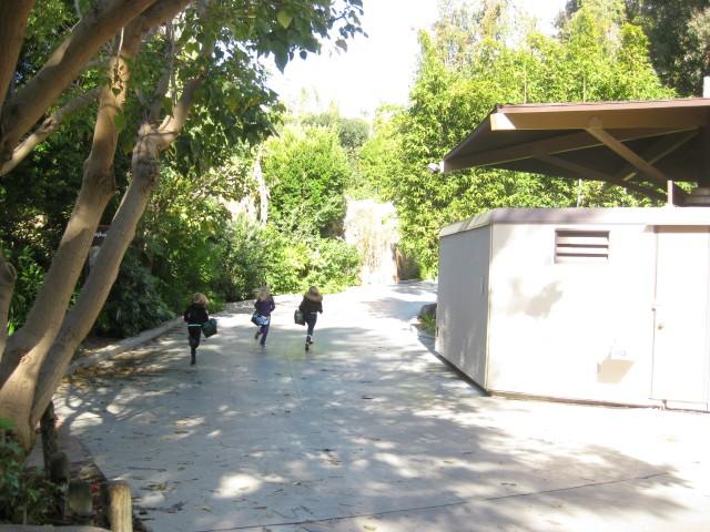 Searching Safari at the LA Zoo