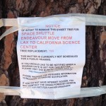 Close up of Bureau of Street Service Tree Removal Notice on Crenshaw. Trees on MLK still have to be tagged with notice. Link on Notice does not contain information about this project!