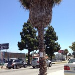 Palm on Crenshaw with Notice of Removal