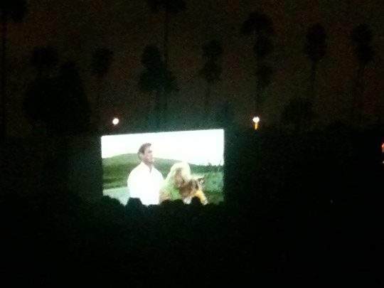 """""""The Birds"""" at Hollywood Forever Cemetery"""