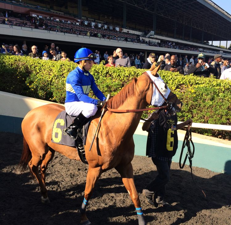 The final day of horse races at Hollywood Park (photo by Nikki Kreuzer)