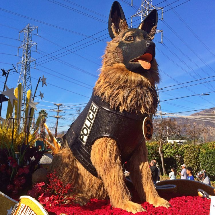A giant K9-Unit Police Dog at the Rose Parade (photo by Nikki Kreuzer)