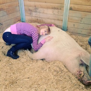Hugging a gentle 1,000 pound giant named Biscuit (photo by Traci Murray)