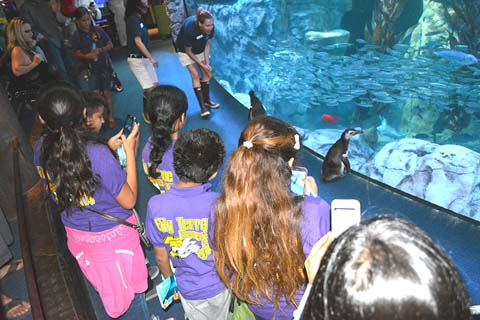 Kids view penguins