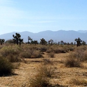 The Antelope Valley (photo by Nikki Kreuzer)