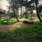 path and rocks
