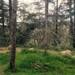 skeletal trees