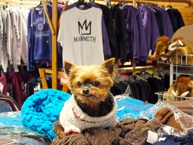 Lacy at Another T-Shirt Shop. Photo by Ed Simon for The Los Angeles Beat.