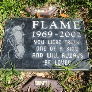 Flame, a true blue horse, 1969-2002 (photo by Nikki Kreuzer)