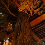 Big tree at Clifton's Cafeteria