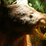 Taxidermied bear at Clifton's Cafeteria