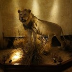 Proud lion at Clifton's Cafeteria