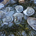 Oysters from Michael Cimarusti and Chef Sam Baxter at Pier del Sol