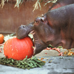 Boo at the Zoo feeding (Photo by Jamie Pham courtesy of LA Zoo)