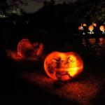 Rise of the jack o' lanterns yoda