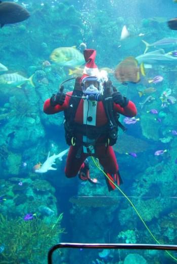 (Photo courtesy of the Aquarium of the Pacific)
