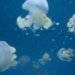 White spotted jellies