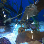 these 5 sea creatures are great at hiding (Photo courtesy of Aquarium of the Pacific
