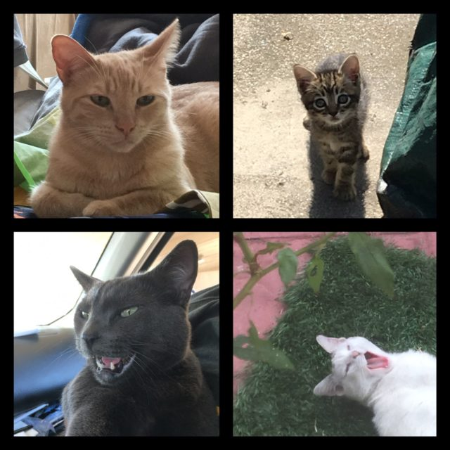Photo of Various Cats by AfroPix