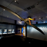"The colossal Tropeognathus mesembrinus model, with a wingspan of more than 25 feet, soars overhead at the entrance to ""Pterosaurs: Flight in the Age of Dinosaurs"" exhibition. Photo ©AMNH/R. Mickens"