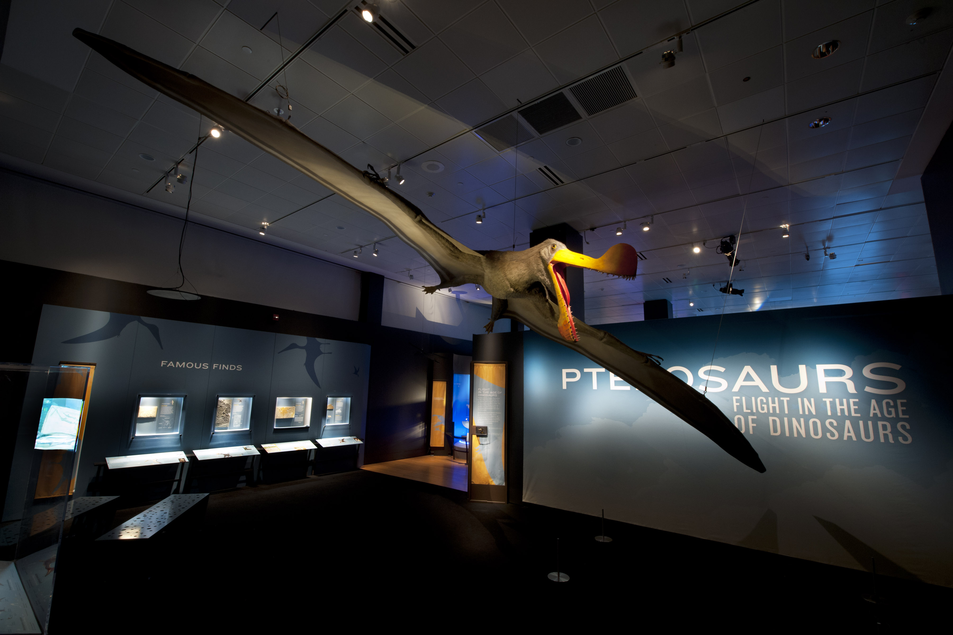 """The colossal Tropeognathus mesembrinus model, with a wingspan of more than 25 feet, soars overhead at the entrance to """"Pterosaurs: Flight in the Age of Dinosaurs"""" exhibition. Photo ©AMNH/R. Mickens"""