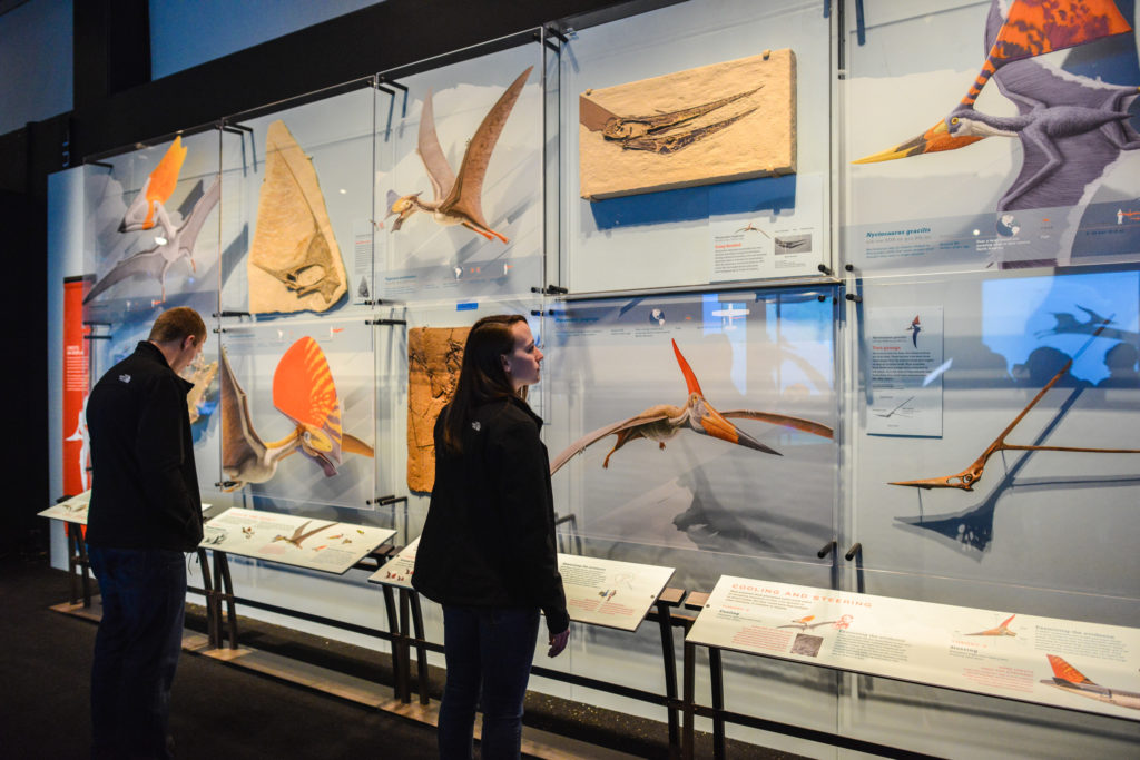 A gallery display illustrates the incredible variety of pterosaur crests—from a dagger-shaped blade that juts from the head to a giant, sail-like extension. Photo ©AMNH/D. Finnin