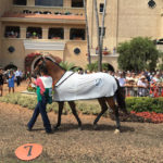 Del Mar Racetrack 9  (Photo by Rachel Ganz)