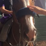 Breeders Cup World Championship 2016 15