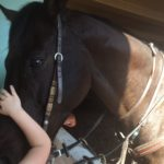 Friendly horse at  Breeders Cup World Championship 2016