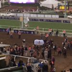 """Winning horse """"Arrogate"""" (In white blanket) is surrounded by fans at  Breeders Cup World Championship 2016"""
