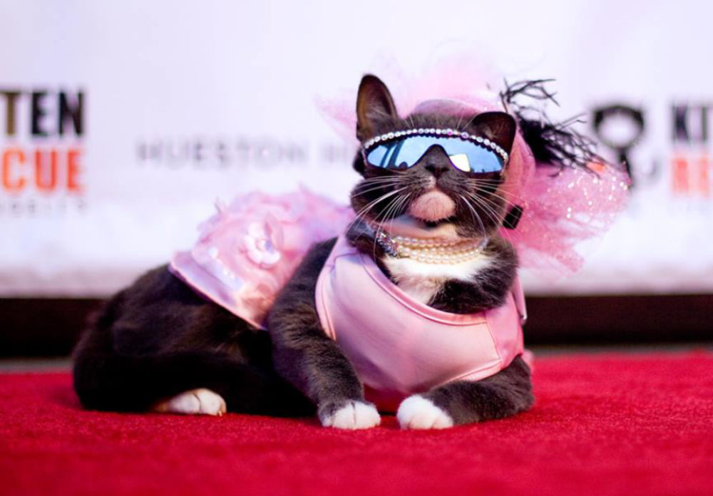 KittenRescue_9thAnnualFurBall_2017.jpg